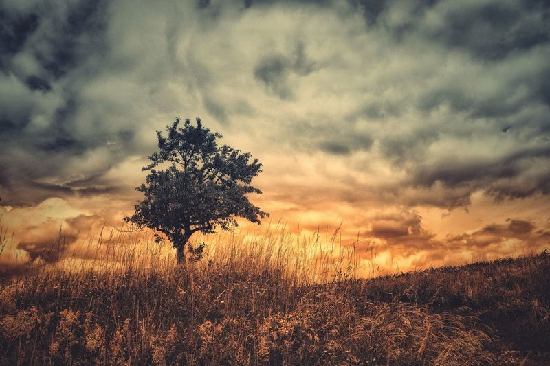 Tree in the sunset, Plant No People Tree Scenics - Nature Silhouette Land Tranquility Outdoors Field Tranquil Scene