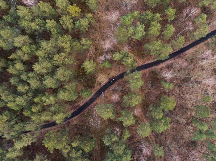 Tree Plant Forest Growth Nature Beauty In Nature Tranquility Landscape Forest Photography Tree Trees Screensaver Drone  Dronephotography Mavic Dji Mavic Air