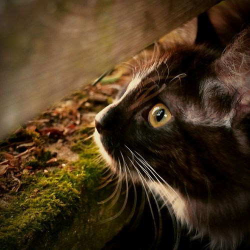 Ma jolie Mishka <3 One Animal Domestic Animals Domestic Cat Feline Outdoors Cat Cats Foret Forest Jardin Rural Scene Chat Mishka Wood Bois