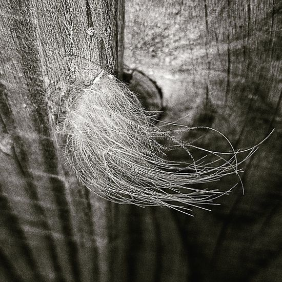 Feather on