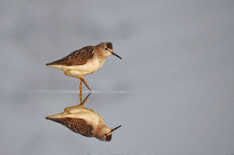 High angle view of bird perching on a water