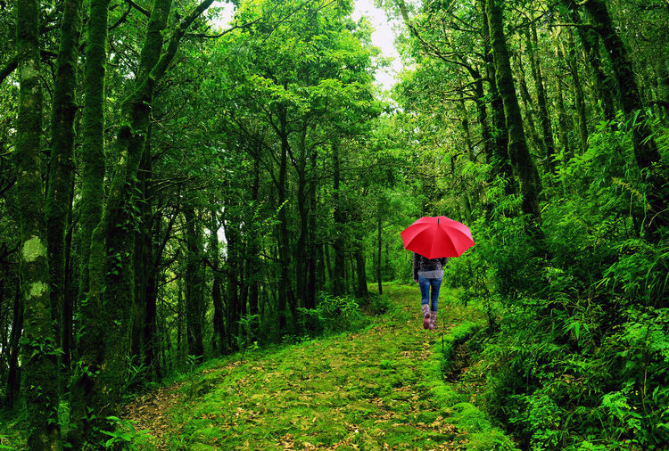 Rear view of woman walking with umbrella in forest