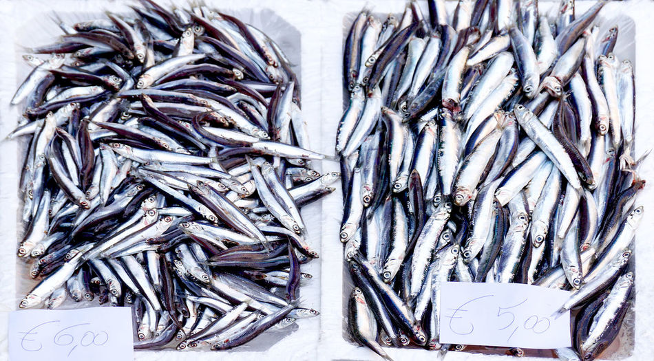 sardines on the fisch market in Catania, Sicily, Italy Seafood Food And Drink Large Group Of Objects Food Fish Retail  Freshness Animal High Angle View For Sale Raw Food Wellbeing No People Market Still Life Fish Market Fishing Industry Consumerism Retail Display Catania Travel Healthy Eating Fishing Sardinas