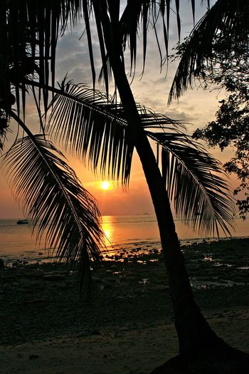 beautiful sunset of Tioman Island (Malaysia) Beauty In Nature Check This Out Hello World Hi! Horizon Over Water Orange Color Palm Tree Palm Trees Scenics Sea Sky Sun Sunset Sunset #sun #clouds #skylovers #sky #nature #beautifulinnature #naturalbeauty #photography #landscape Sunset And Clouds  Sunset Silhouettes Sunset_collection Sunsetporn Sunsets The Great Outdoors - 2016 EyeEm Awards Tioman Tiomanisland Tranquil Scene Tranquility Water