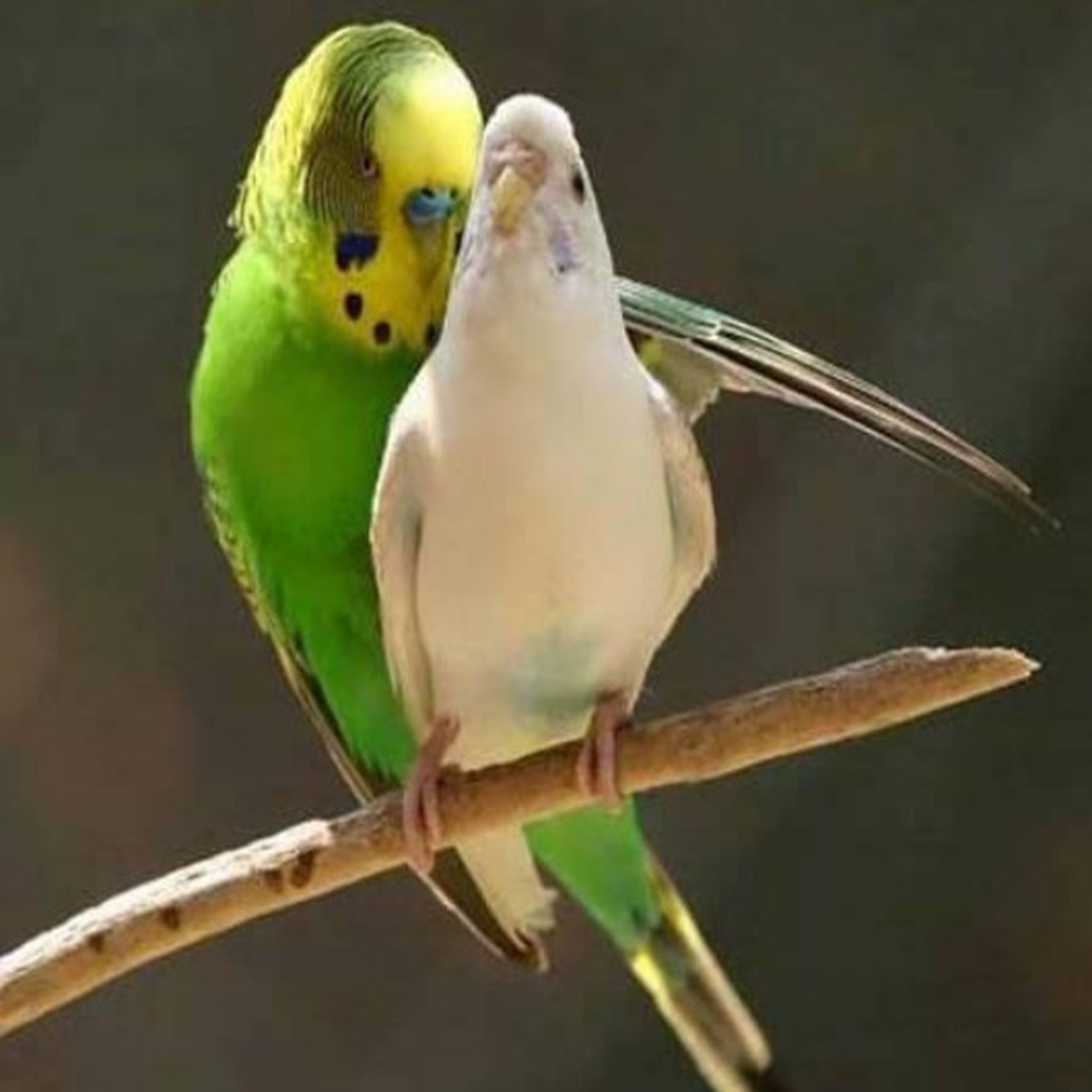 animal themes, one animal, bird, animals in the wild, wildlife, perching, close-up, beak, focus on foreground, side view, nature, full length, parrot, animal head, zoology, day, outdoors, no people, wood - material, branch