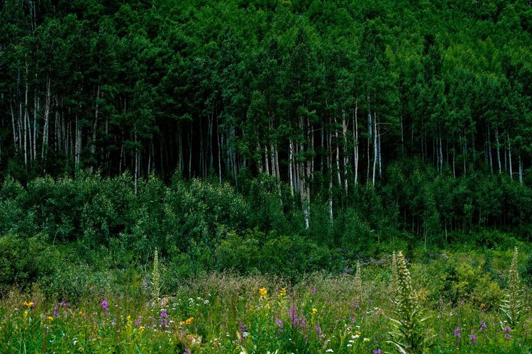 Been There. Colorado Beauty In Nature Day Forest Growth Landscape Nature No People Outdoors Tranquility Tree