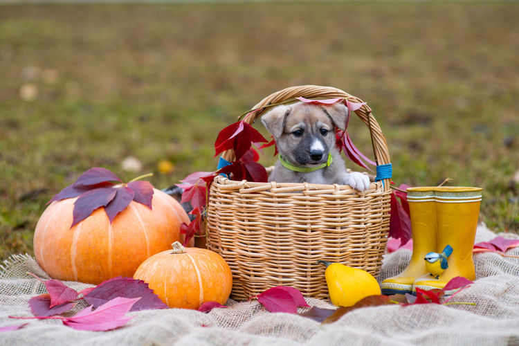 Close-up of a dog in basket