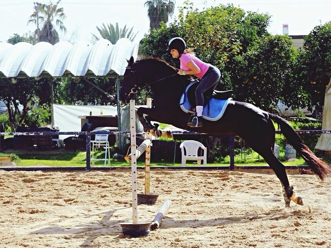 Horses Horsejumping Equestrian
