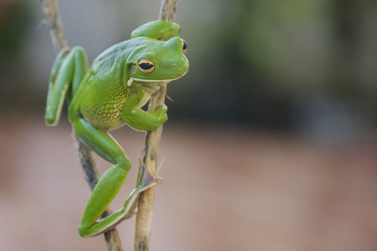 Close-up of frog on branch