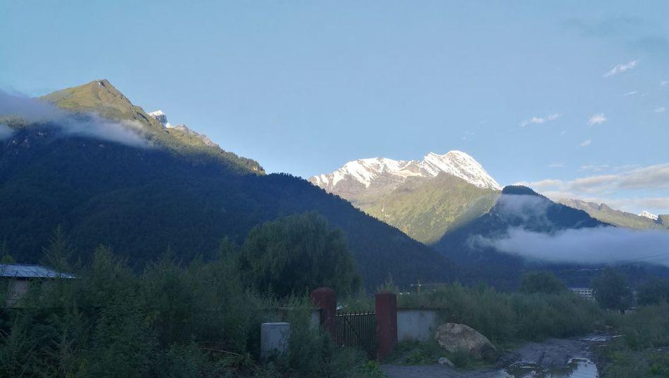 Tree Mountain Flower Sky Mountain Range Snowcapped Mountain Peak Snow Covered Snowcapped Mountain Mountain Ridge