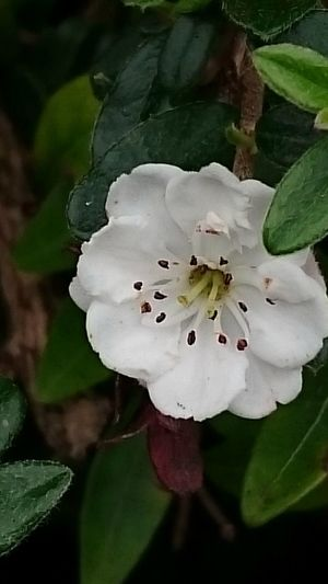 Blossom... Full