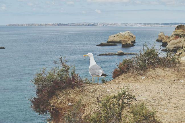 Hummmmm the sea is nice today, seagull thinking.. Seagulls And Sea Seagull On Rocks Seagull On Land Day Week On Eyeem Close-up EyeEm Selects Bird Water Flamingo Sea Swan Beach Animal Themes Calm Horizon Over Water Shore Seascape Ocean Coastline Rocky Coastline Tranquil Scene