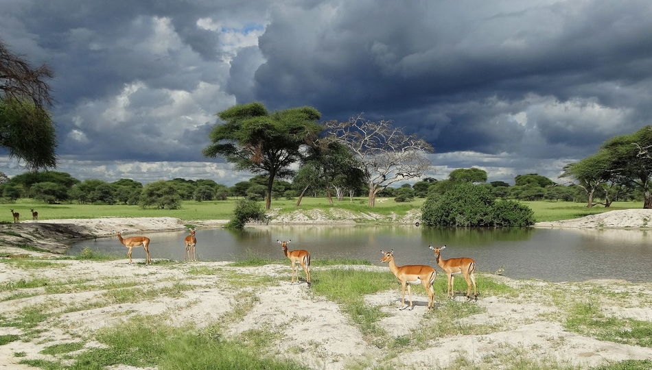 Tarangire National Park ♡. Animal Themes Nature Cloud - Sky Sky No People Outdoors Day Tree Mammal Beauty In Nature Tarangire Tarangire National Park Wildlife Photography
