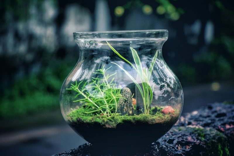 Close-up of glass jar on land