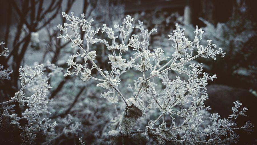 Frozen. Winter