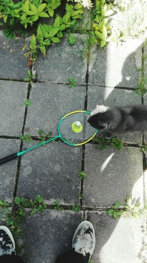 Cat wants to