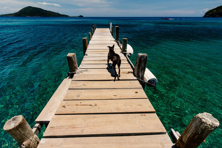 High angle view of dog walking on pier over sea
