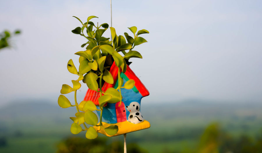 Close-up of multi colored toy on plant against sky