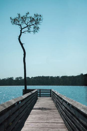 Bayou Beauty In Nature Hidden Gems  Boardwalk Calm Clear Sky End Of Pier End Of The Road Jetty Lake Lone Tree Nature Outdoors Pier Rippled Scenics Sky Tall Tree The Way Forward Tranquil Scene Tranquility Tree Water Wood Wooden Miles Away Breathing Space #FREIHEITBERLIN