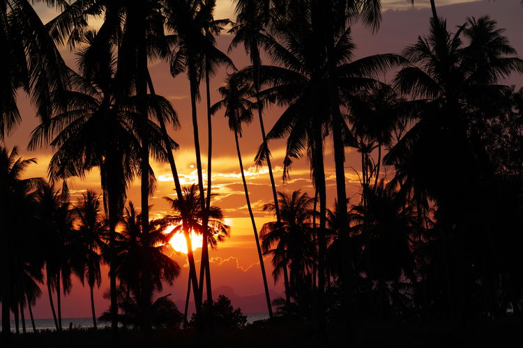 Plant Silhouette Palm Tree Tropical Climate Beauty In Nature Nature Tree Sunset Sky Tranquility Growth Scenics - Nature Orange Color No People Tranquil Scene Coconut Palm Tree Idyllic Outdoors Water Dark Tropical Tree Koh Samui,Thailand Travel Destinations Romantic Landscape Dramatic Sky