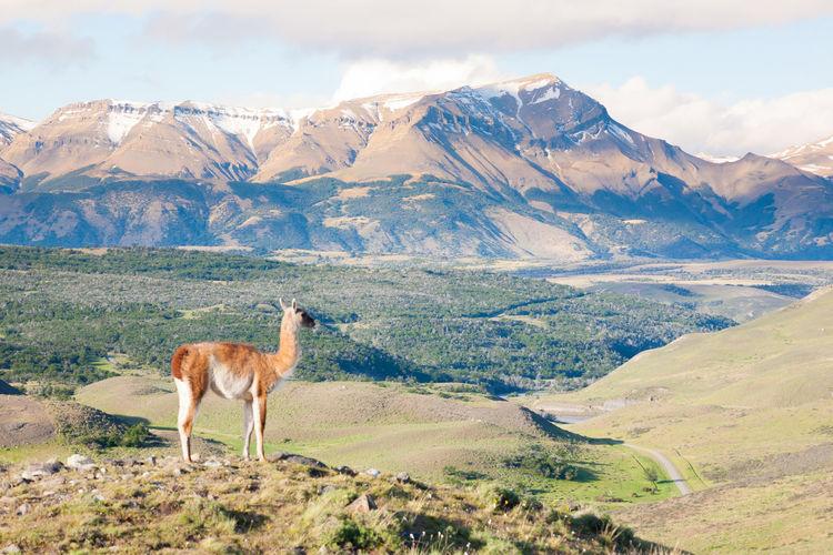 Horse standing on landscape against mountain range