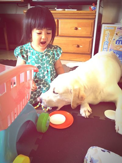 Dog And Baby Child and Dog Labrador Retriever Dogs Of EyeEm Dogstagram