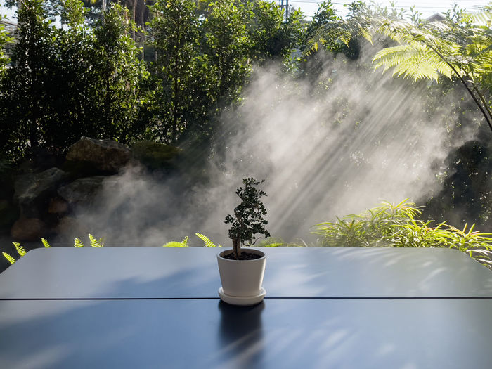 Potted plant on table against trees