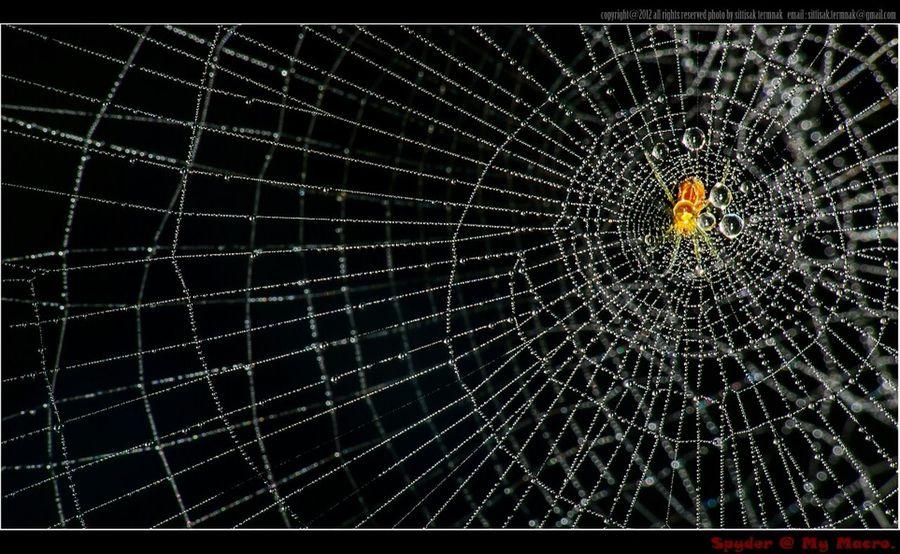Spider @ My Macro. Thailand_allshots Macro_collection EyeEm Nature Lover EyeEm Best Shots