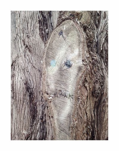 Sous l'écorce Tree Trunk Textured  Tree No People Close-up Day Outdoors Nature