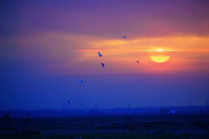 Flying Sunset Mid-air Landscape Bird Outdoors Sky No People Beauty In Nature Naturephotography Live For The Story