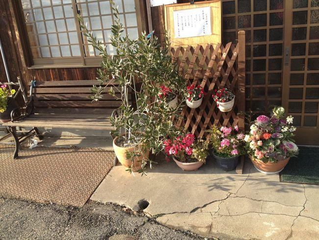 flowers Beutiful  Japan Street Plant Potted Plant Flower EyeEmNewHere