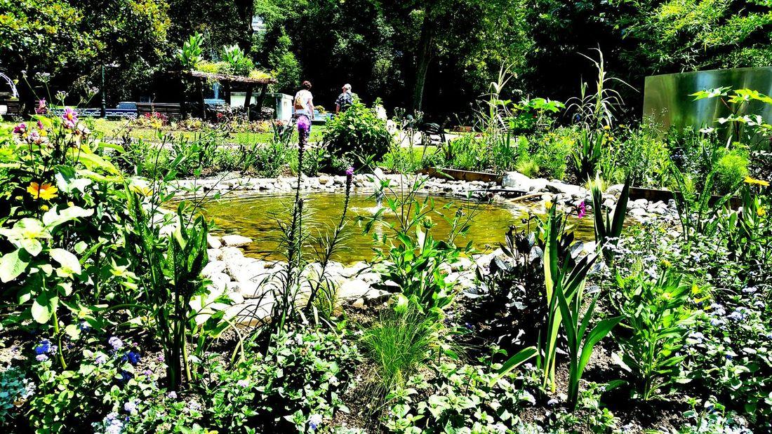Green Please Flowers,Plants & Garden Aix Les Bains Beautiful Nature EyeEm Nature Lover Fleur ♡ Nature France Popular Photos Flowers Nature Photography