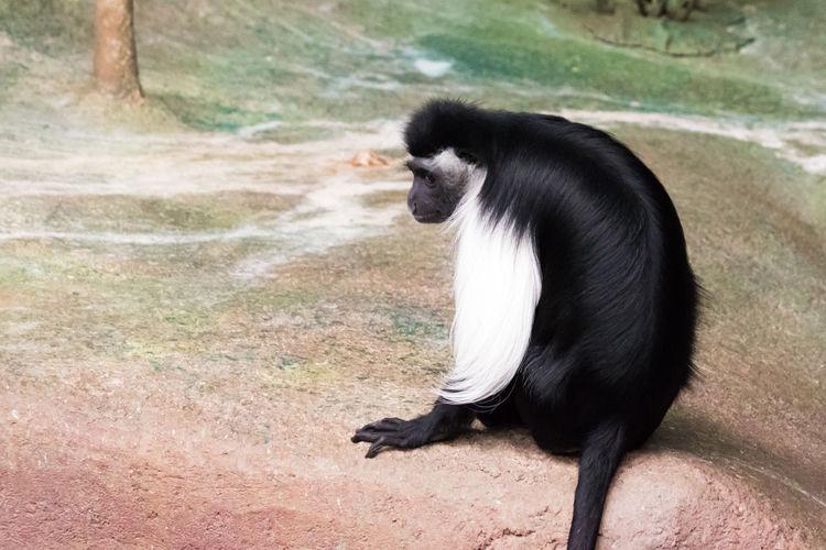 Animals Brookfield Zoo Monkey Monkeys Nature No People Zoo Zoo Animals