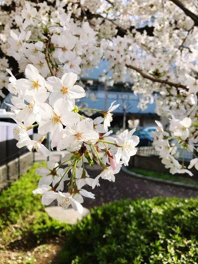 Flowering Plant Flower Plant Fragility Freshness Vulnerability  Blossom