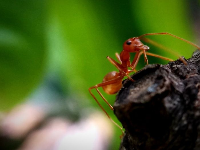 Animal Wildlife Animals In The Wild Ant Close-up Day Green Color Insect Invertebrate Outdoors Selective Focus