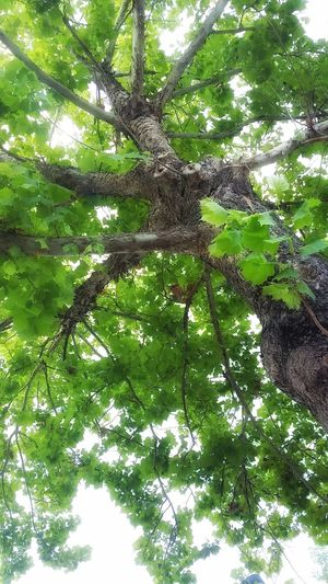 Nature Green Nature Photography Tree Leaves🌿 Dreaming Is Believing Beautiful Nature Beautiful Day