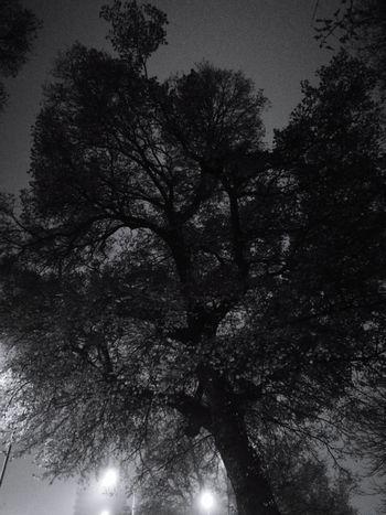 dramatic tree Night Sky Monochrome Blackandwhite Black And White Photography Autumn Night Sky Tree Silhouette