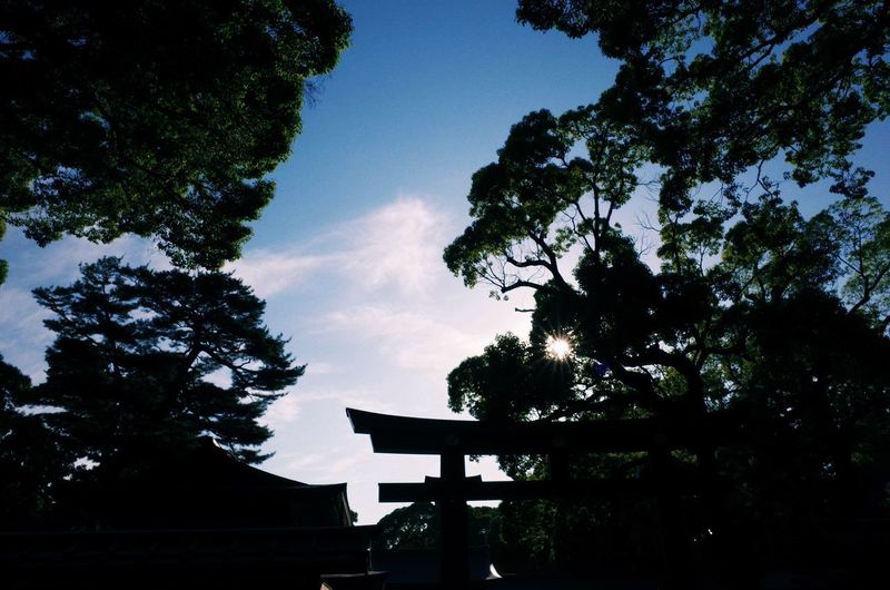 TORII Architecture Belief Built Structure Cloud - Sky Day Growth History Low Angle View Nature No People Outdoors Place Of Worship Plant Religion Silhouette Sky Spirituality Tranquil Scene Tranquility Tree