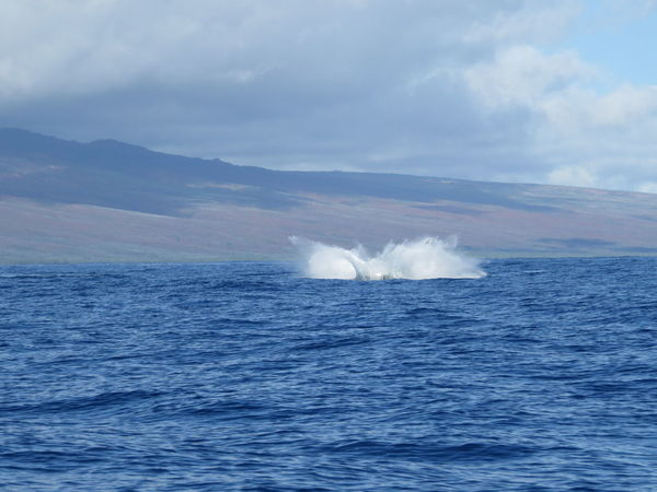 early morning whale watching, Maui, Hawaii, 03.2014 Beauty In Nature Blue Cloud Cloud - Sky Day Humpback Whale Idyllic Lahaina Bay Motion Mountain Nature No People Outdoors Power In Nature Remote Rippled Scenics Sea Sky Tranquil Scene Tranquility Water Waterfront Wave Whale Watching