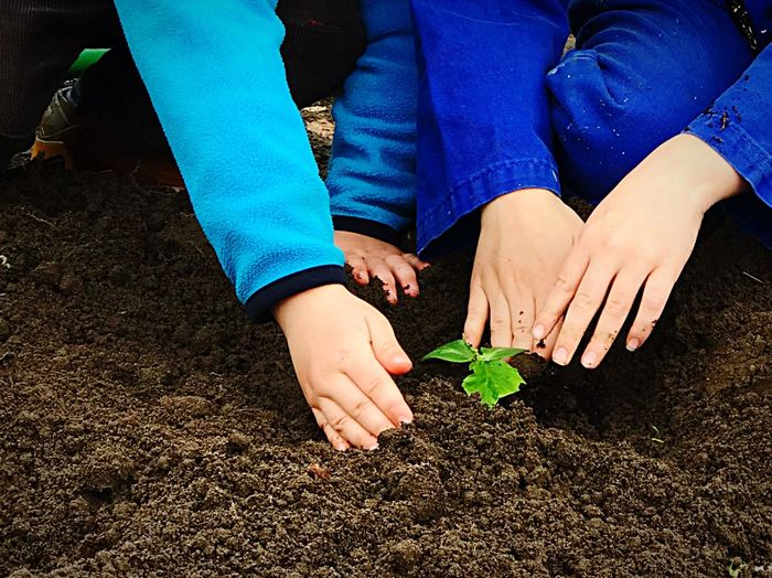Cropped Image Of People Planting In Garden