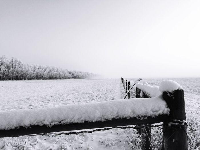 Fog IPS2016Composition Blackandwhite Winter Farm Life Showcase: January White Album IPS2016White