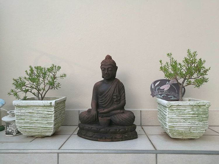 Sitting Religion Plant Table No People Indoors  Lotus Position Statue Nature Day Buddha Design Theme Light Contrast Tree Style Iconic Growth Outdoors Sky Lifestyles Bonsai Beauty Enlightment