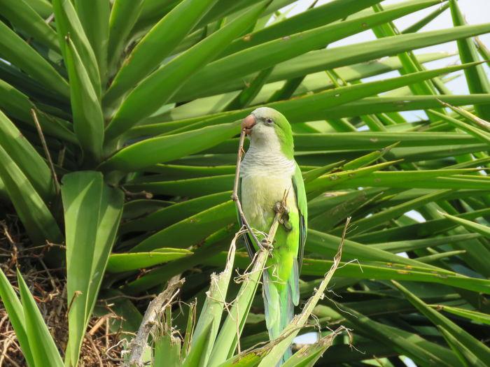 Bird Tree Palm