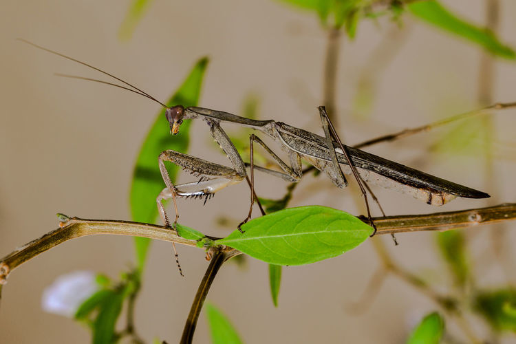 Animal Themes Animal Wildlife Animals In The Wild Close-up Damselfly Day Focus On Foreground Insect Leaf MantisReligiosa Nature No People One Animal Outdoors Perching Plant Winged