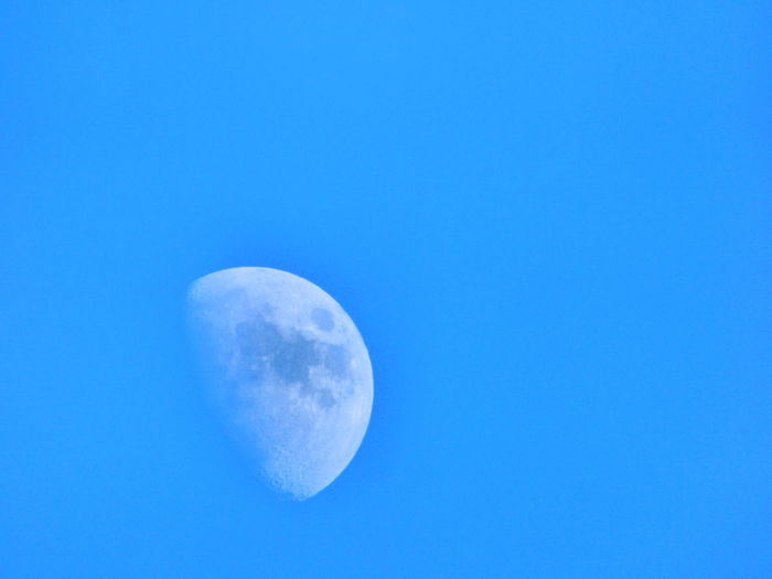 Animals, frost flowers and moon. Abstract Blue Clear Sky Day Fostflowers High Section Lighting Equipment Majestic Mond Moon Moon Moon Light Moon Shots Moon_collection Moonlight Moonrise Moonshine No Limits