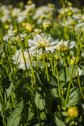 Growth Plant Flower Green Color Leaf Flowering Plant Plant Part Nature Beauty In Nature Fragility Vulnerability  Close-up Outdoors No People Freshness Green Field Environment Land Leaves Bright Spring