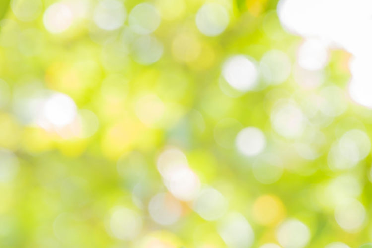 Backgrounds Abstract Copy Space Vibrant Color Textured  Nature Soft Focus Pattern White Color Outdoors Abstract Backgrounds Decoration Light - Natural Phenomenon Defocused Green Color Bright Clean Shiny Textured Effect Bokeh