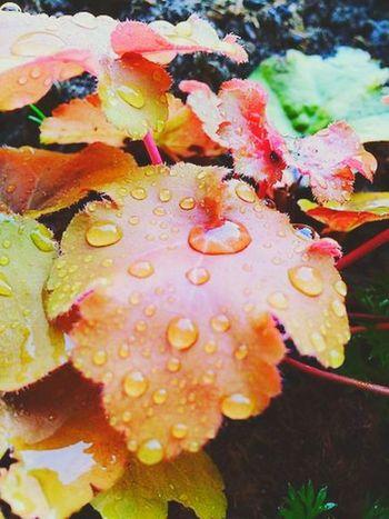 ...Autumn Leaves... Autumn Leaves Autumn Leaves Autumn Colors Colours Colours Of Autumn Rain Raindrops Summerrain The Moment - 2015 EyeEm Awards Nature Blatt Blätter Herbstblatt Season  Jahreszeiten Spring Red Yellow Orange Showcase: February