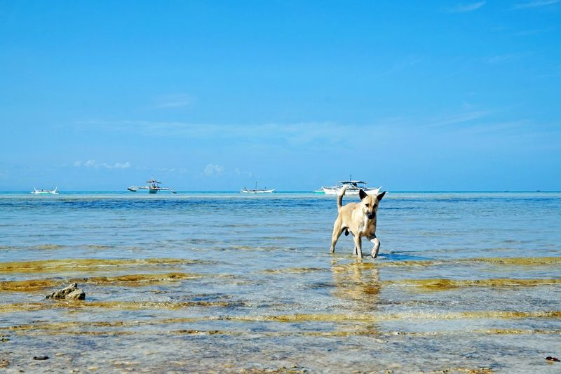 Animal Animal Themes At The Beach Beach Dog Beauty In Nature Blue Day Dog At Beach Dog In Beach Eyeem Philippines Horizon Over Water Idyllic Mammal Nature No People Non-urban Scene Outdoors Remote Rippled Scenics Sea Sky The Week On EyeEm Tranquil Scene Tranquility People Of The Oceans