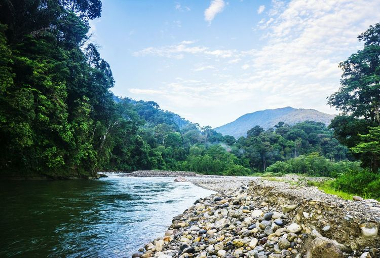 Hill River Jungle Rainforest Ecuatorial Travel Bali Sumatra  Sumatra  INDONESIA Forest Tropical Scenics Sky Growth No People Grass Sunlight Outdoors Day Beauty In Nature Nature Green Color Water Tree